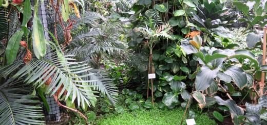 Botanischer Garten in Malešice, Gewächshaus