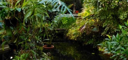 Botanischer Garten der Karlsuniversitaet Prag - 2