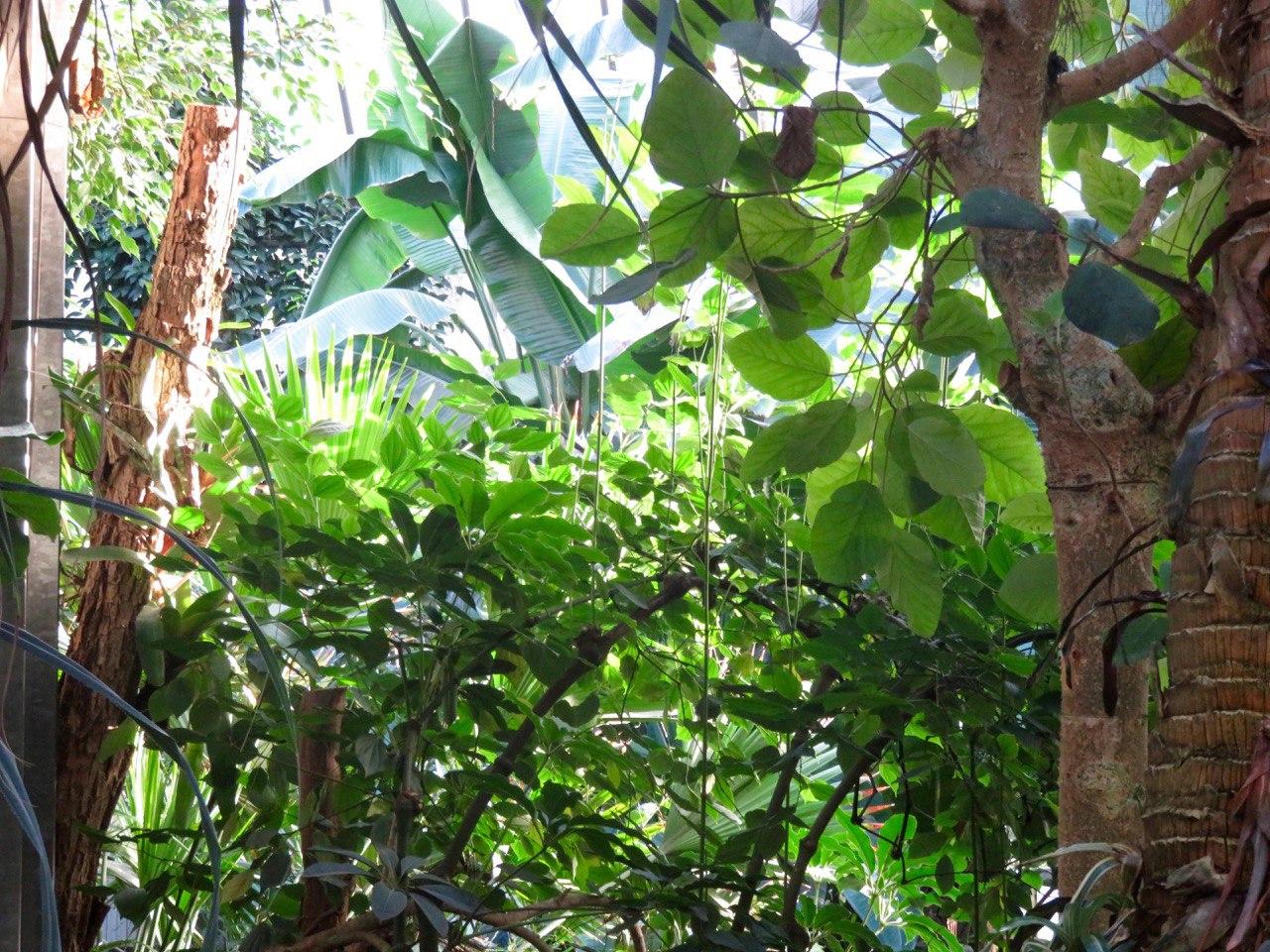 Der Dschungel Am Karlsplatz